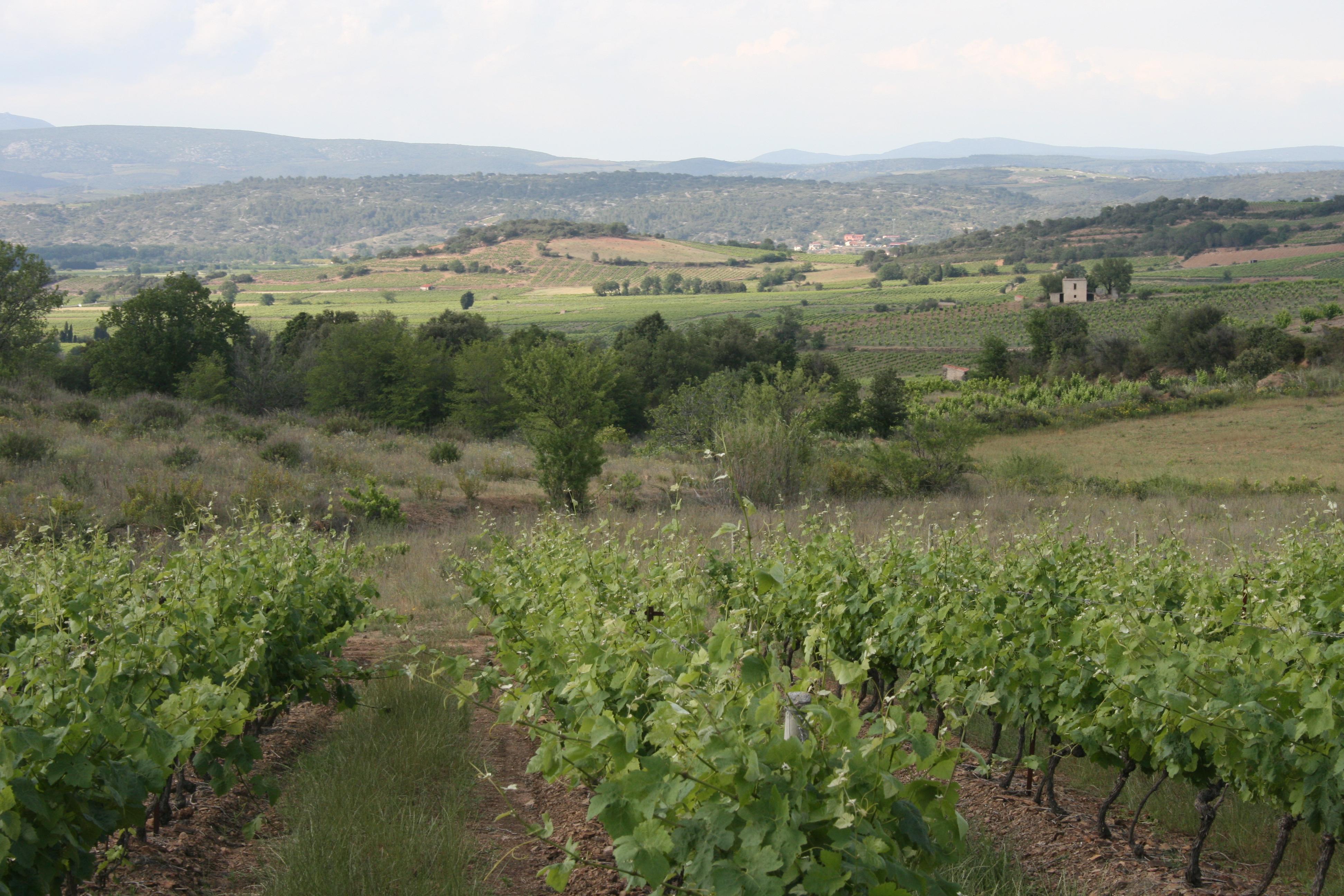 Vignes Comelade