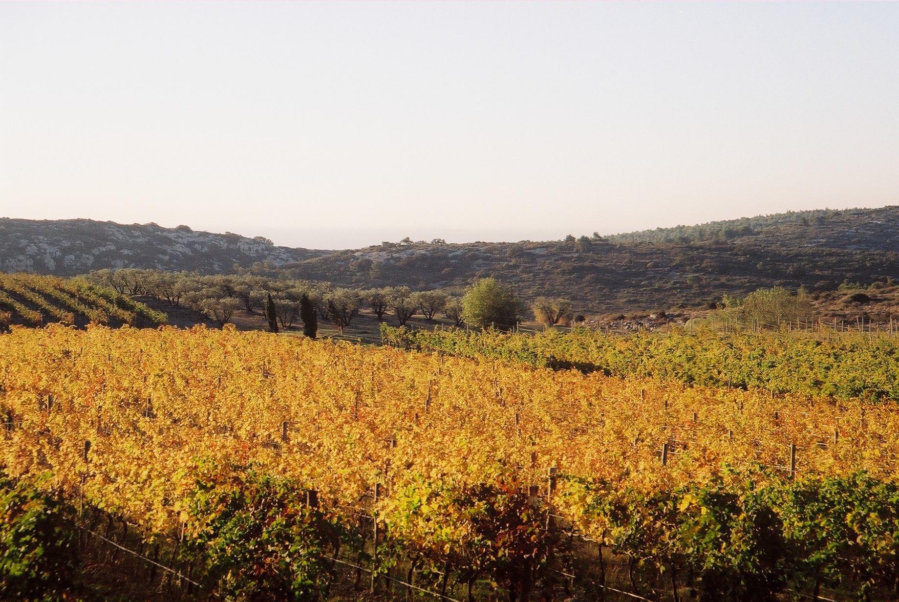 Vignes automne Soleilla